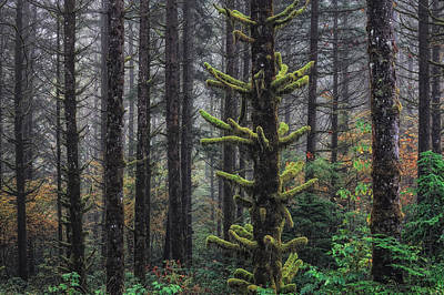 This Is British Columbia No.54f - Misty Mystical Moss Forest IIi Art Print by Paul W Sharpe Aka Wizard of Wonders