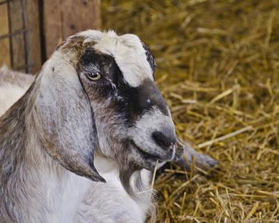 Food And Beverage Photograph - This Is One Hip Goat by LeeAnn McLaneGoetz McLaneGoetzStudioLLCcom