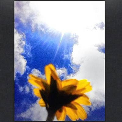 Sunflowers Wall Art - Photograph - This Is One Of Those Mini Sunflowers U by Yzza Sebastian