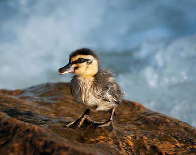 Australia Digital Art - This Little Duck by Heather Thorning