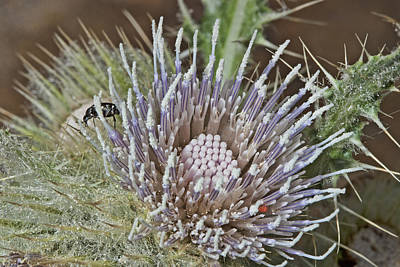 Photograph - Thistle Critters by Gregory Scott