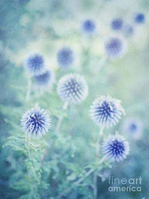 Thistle Photograph - Thistle Dreams by Priska Wettstein