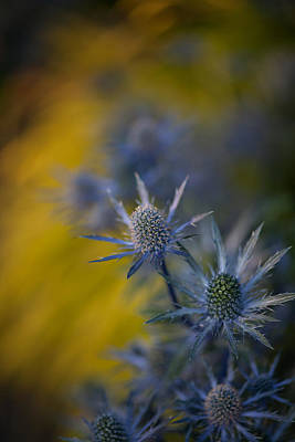 Abstract Flowers Royalty-Free and Rights-Managed Images - Thistles Motion by Mike Reid