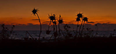 Photograph - Thistles Silhouette by Nadya Ost