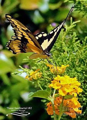 Thoas Swallowtail #2 Art Print by Rebecca Morgan