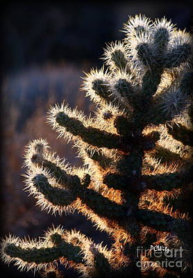 Photograph - Thorny Evening by Patrick Witz