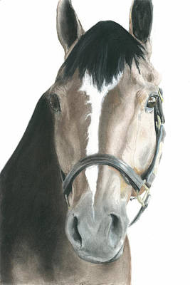 Bay Horse Drawing - Thoroughbred Appendix Tripp by Jessica Raines