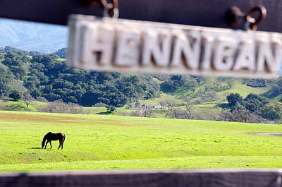 Photograph - Thoroughbred Grazing by Jeff Lowe