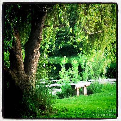 Willow Lake Photograph - Thoughtful Spot by Trish Hale