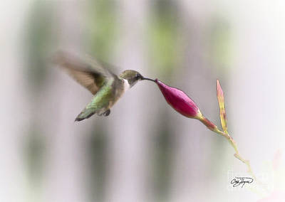 Floral Photograph - Threading The Needle by Cris Hayes