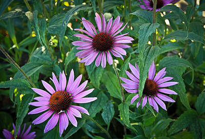 Photograph - Three Coneflowers by Steve McKinzie