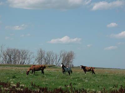 Three Horse Ranch Art Print by Brian  Maloney