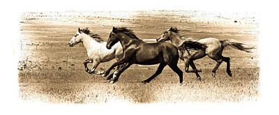 Photograph - Three Horses Fade by Steve McKinzie