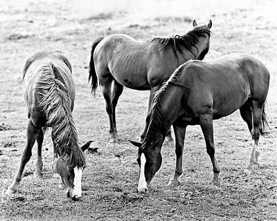 Photograph - Three Horses by Joe  Palermo