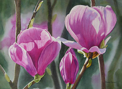 Three Magenta Magnolias Art Print by Sharon Freeman