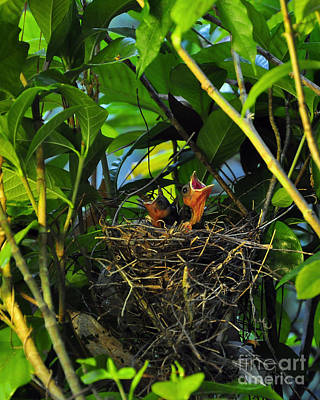 Baby Bird Photograph - Three Of A Kind by Al Powell Photography USA