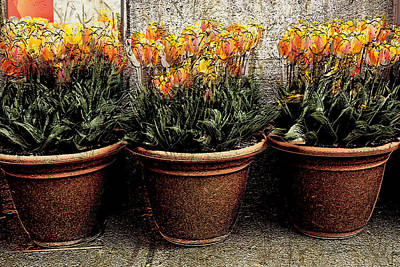 Photograph - Three Orange Pots by Barbara  White