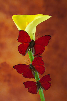 Three Red Butterflies On Calla Lily Art Print by Garry Gay