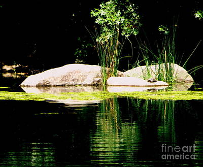 Three Rocks And A Turtle Art Print by Maria Scarfone