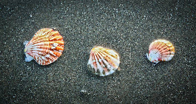 Photograph - Three Sea Shells by Steve McKinzie