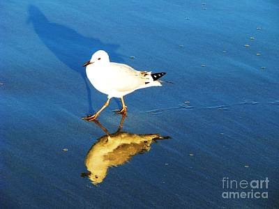Photograph - Three Seagulls From One by Michele Penner