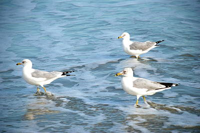 Three Seagulls Art Print by Kathy Gibbons