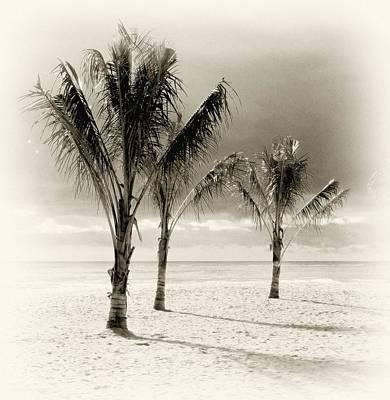 Photograph - Three Trees - Jersey Shore by Angie Tirado