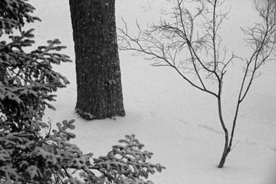 Three Trees In Snow Art Print by Simone Hester
