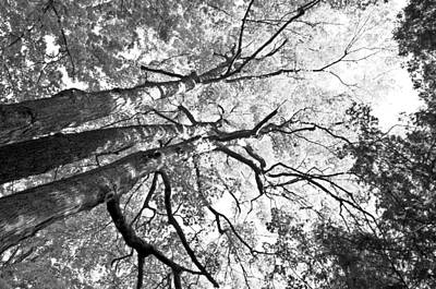 Decay Photograph - Three Trees Reach For The Sky Black And White by LeeAnn McLaneGoetz McLaneGoetzStudioLLCcom