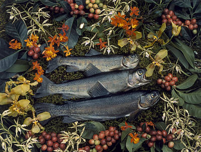 Three Trout Surrounded By Coffee Art Print by Luis Marden