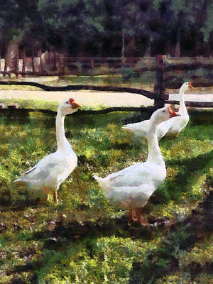 Gaggle Photograph - Three White Geese by Susan Savad