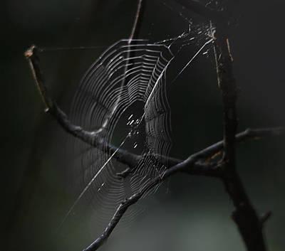 Spiderweb Photograph - Through Dreams by Susan Capuano