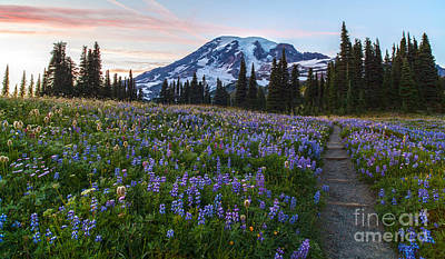 Mount Mazama Photograph - Through The Flowers by Mike Reid