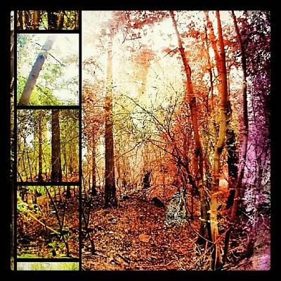 Woodland Photograph - Through The Forest by Vicki Field