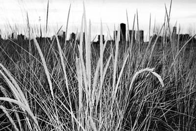 Photograph - Through The Grass by Milena Ilieva