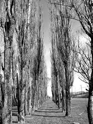Through The Trees Art Print by Jonathan Lagace