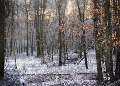 Art Print featuring the photograph Through The Woods Into The Sunset by Yelena Rozov