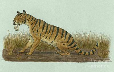 Tiger Markings Digital Art - Thylacosmilus Atrox, A Genus by Heraldo Mussolini