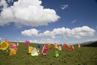 Tibetan Prayer Flags In A Field Art Print by David Evans