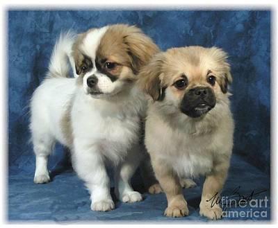 Pup Digital Art - Tibetan Spaniel Pups by Maxine Bochnia