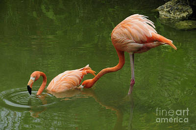 Tickled Pink Photograph - Tickle Tickle by Cindy Lee Longhini