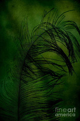 Art Print featuring the photograph Tickled Green by Robin Dickinson
