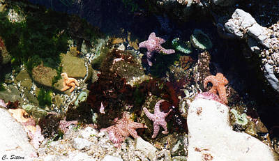 Photograph - Tide Pool by C Sitton