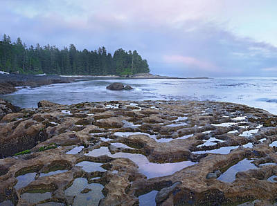 Tide Pools Exposed At Low Tide Print by Tim Fitzharris
