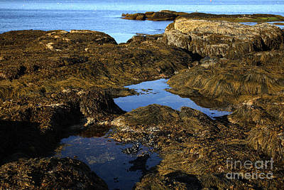 Tidepool In Maine Art Print by Ted Kinsman