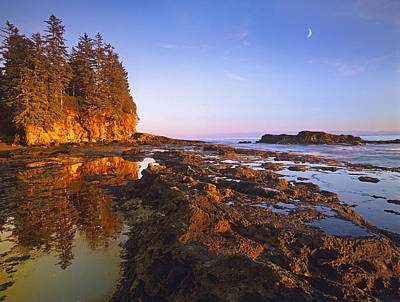Juan De Fuca Provincial Park Photograph - Tidepools Exposed At Low Tide Botanical by Tim Fitzharris