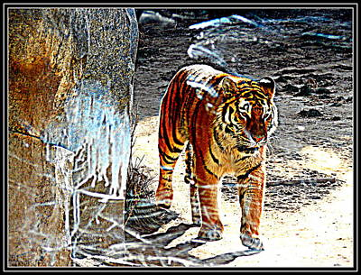 Photograph - Tiger-2 by Anand Swaroop Manchiraju