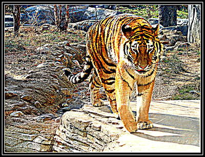 Photograph - Tiger-5 by Anand Swaroop Manchiraju