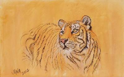 Drawing - Tiger Alert by Michelle Wolff