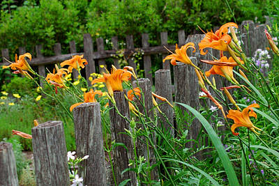 Photograph - Tiger Lilies 2 by Joann Vitali